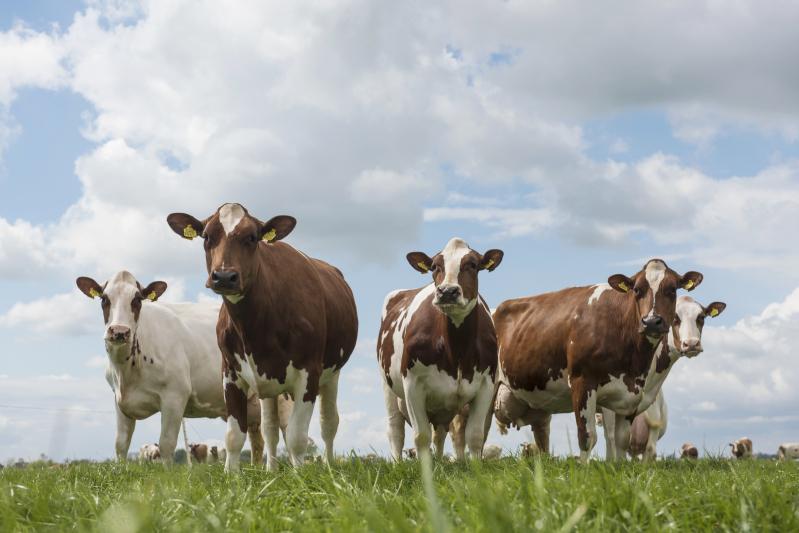 genoomtesten mrij-koeien